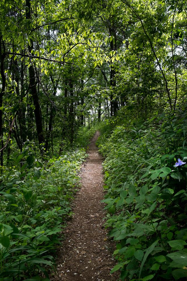 Appalachian Trail 5 2015 27