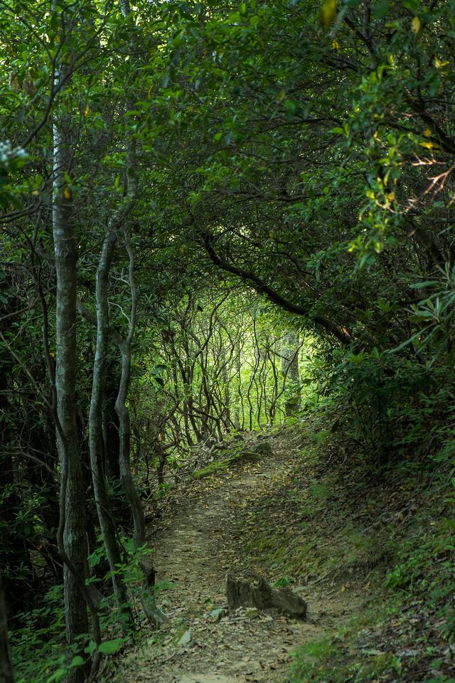 Appalachian Trail 5 2015 216